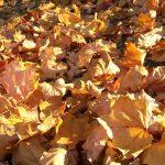 Herbst - Thomas Strauch
